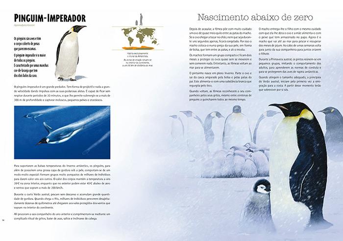 Wook.pt - Pinguim-Imperador