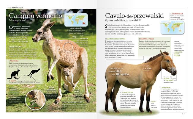 Wook.pt - Canguru Vermelho e Cavalo de Przewalski