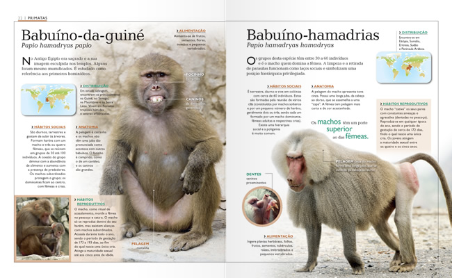 Wook.pt - Babuíno-da-Guiné e Babuíno-Hamadrias