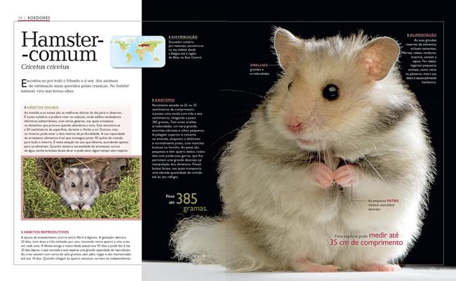 Wook.pt - Hamster-Comum